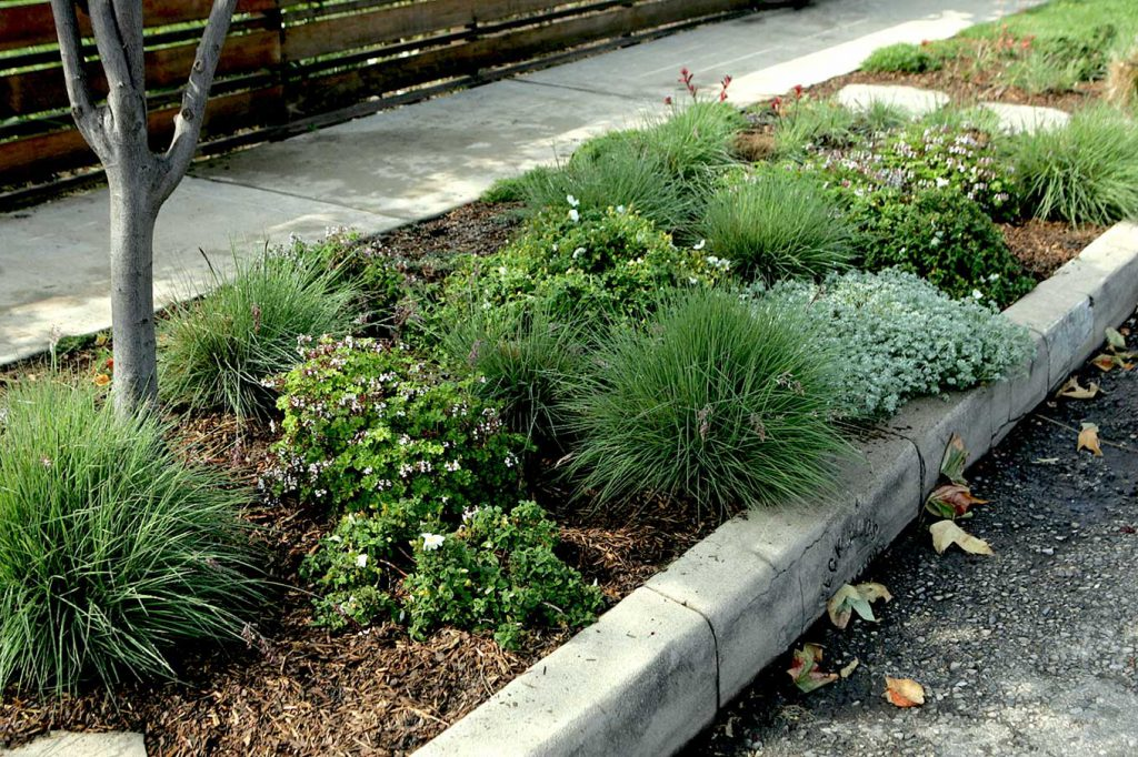 during a look at how different homeowners have gardened in the strip of ground between the sidewalk and the street, Tuesday in Venice, May 09, 2006. We're showing different ways readers can approach this difficult spot of ground with its particular challenges -- watering, opening doors, etc.
