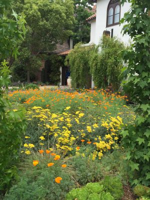Drought-Tolerant Garden Tour
